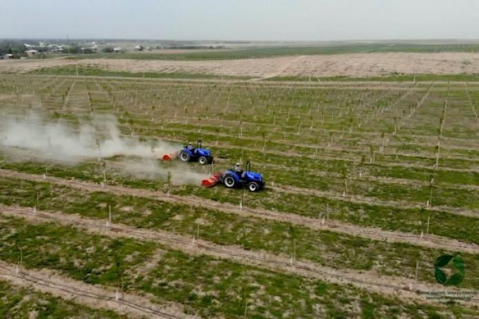 1-iyul holati: Respublikamizda qishloq xo'jaligi ekinlari ekilgan maydon 3,3 mln gektarni tashkil etdi