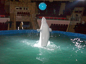 Шоу дельфинов в Ташкенте