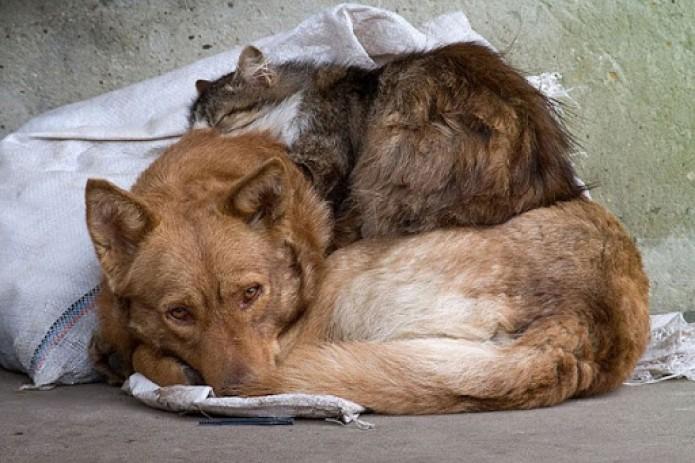 Жестокое обращение с животными могут криминализовать