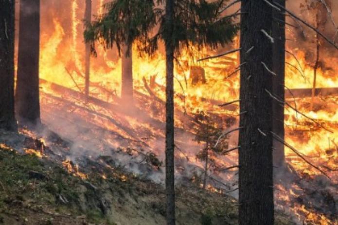 Сибирь снова горит. 3 млн га в России объяты огнем