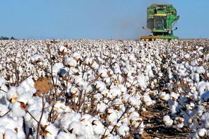Узбекистан откажется от практики госзаказа на заготовку хлопка и зерна