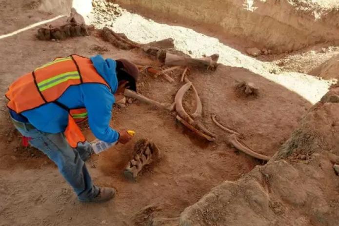 «Их слишком много»: в Мексике нашли кости 60 мамонтов
