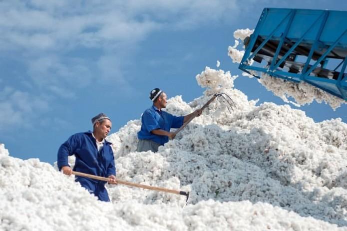 Узбекистан занял шестое место по производству хлопка в мире