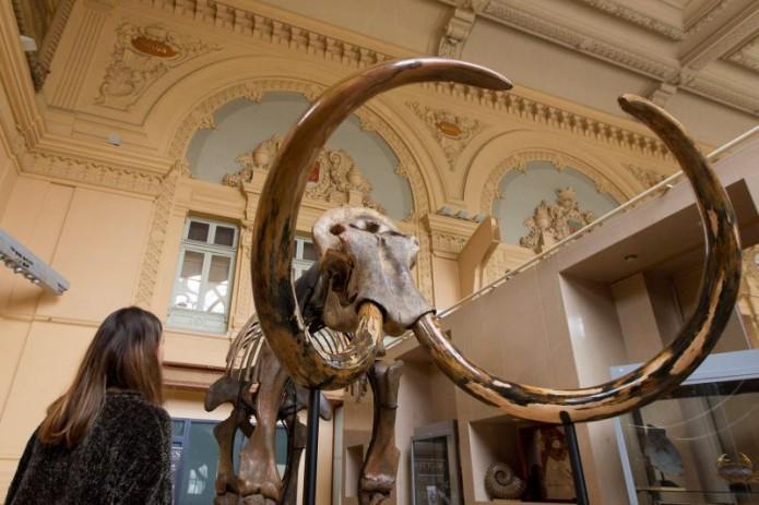 Скелет мамонта возрастом 15 тыс. лет выставлен наторги вЛионе
