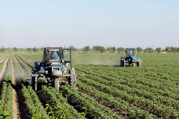 Более 120 тысяч га земли расхищены и бесцельно выданы за два года