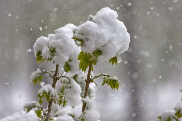 «Дождь, снег, туман». Синоптики рассказали о погоде на текущую неделю