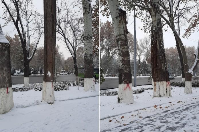 Госкомэкологии: Деревья возле Дворца «Туркистон» отмечены с целью их обработки и лечения