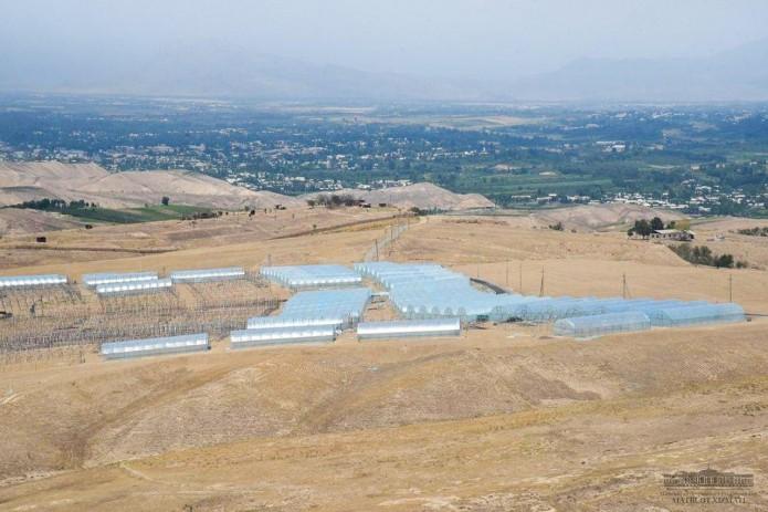 Президент ознакомился с проектом строительства комплекса теплиц в Чартакском районе