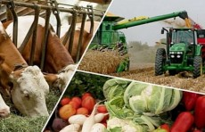 Опубликован проект Стратегии развития сельского хозяйства на 2020-2030 годы