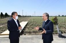 Фермер должен выходить на поле не для плана, а для получения дохода - Шавкат Мирзиёев