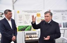 В Узбекистане создадут ассоциацию производителей сои