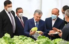 Президент осмотрел инновационную теплицу, построенную по испанской технологии