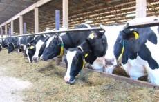 В Узбекистане установлен порядок страхования скота