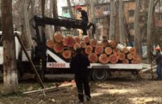 Оценен ущерб от незаконной вырубки деревьев за время действия моратория