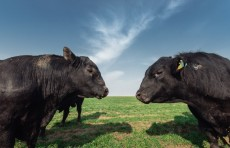 Как развивается животноводство в Джизакской области — пресс-тур кластера Jizzax Organiс