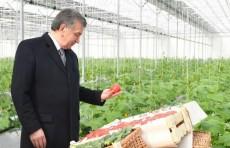 Президент осмотрел гидропонную теплицу в Хавастском районе