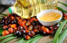 Депутаты инициировали проверку влияния пальмового масла на здоровье человека