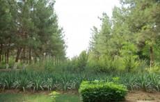 Жители лесных районов Узбекистана получают выгоду от проектов ФАО