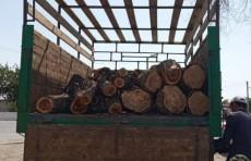 Житель Джизакской области самовольно срубил дерево. Ему выписали штраф на 2,4 млн. сумов