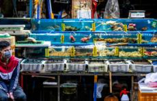 В Китае говорят, что рынок в Ухане не был источником коронавируса