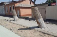 Генпрокуратура возбудила уголовное дело в отношении «лесорубов»