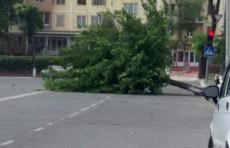 В Ташкенте ожидается сильный ветер