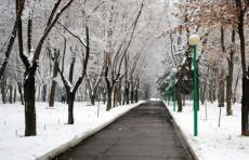 В Узбекистане вновь ожидаются снег и морозы