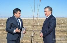 Шавкат Мирзиёев посетил ореховые и миндальные плантации