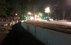 Хокимият Мирзо Улугбекского района: в процессе расширения дороги ни одно дерево не пострадает