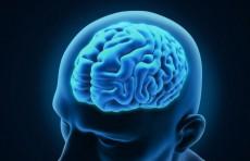 Мозг преступника и обычных людей отличается  - ученые