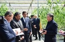 Шавкат Мирзиёев: Необходимо расширить работу по созданию теплиц на гидропонике