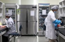 """Саморазмножающаяся"" РНК-вакцина защитила макак от коронавируса – исследование"