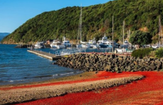 Новозеландские пляжи покраснели от миллионов выброшенных на берег омаров: фото