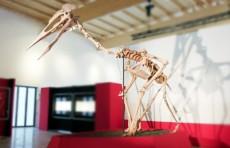 """""""Повелитель небес"""" - скелет гигантского птерозавра показали в Германии"""
